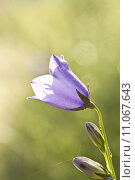 Купить «Close up on purple flowers with morning dew », фото № 11067643, снято 19 февраля 2019 г. (c) PantherMedia / Фотобанк Лори