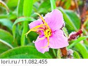 Купить «wild flowers in forest», фото № 11082455, снято 27 марта 2019 г. (c) PantherMedia / Фотобанк Лори