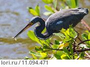Купить «nature wildlife bird birds florida», фото № 11094471, снято 6 июля 2020 г. (c) PantherMedia / Фотобанк Лори