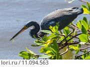 Купить «nature wildlife bird birds florida», фото № 11094563, снято 6 июля 2020 г. (c) PantherMedia / Фотобанк Лори