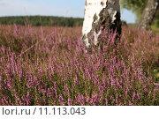 Купить «nature autumn blossom fall purple», фото № 11113043, снято 19 февраля 2019 г. (c) PantherMedia / Фотобанк Лори