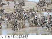 Купить «animal mammal animals africa adventure», фото № 11123999, снято 19 июня 2019 г. (c) PantherMedia / Фотобанк Лори