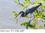 Купить «nature wildlife bird birds florida», фото № 11136347, снято 6 июля 2020 г. (c) PantherMedia / Фотобанк Лори