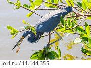 Купить «nature wildlife bird birds florida», фото № 11144355, снято 6 июля 2020 г. (c) PantherMedia / Фотобанк Лори