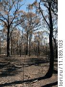 Купить «After the Bushfire», фото № 11189103, снято 27 марта 2019 г. (c) PantherMedia / Фотобанк Лори