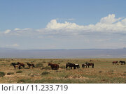 Купить «horn sheep goat mongolia steppe», фото № 11233719, снято 27 мая 2019 г. (c) PantherMedia / Фотобанк Лори