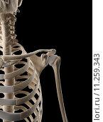 Купить «medical illustration of the shoulder», фото № 11259343, снято 26 мая 2019 г. (c) PantherMedia / Фотобанк Лори