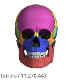 Купить «3d rendered illustration - human skull anatomy», иллюстрация № 11270443 (c) PantherMedia / Фотобанк Лори