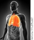 Купить «3d rendered illustration of the male lung», фото № 11275227, снято 17 июля 2019 г. (c) PantherMedia / Фотобанк Лори