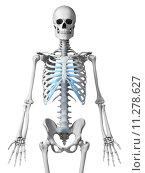 Купить «3d rendered illustration - skeletal thorax», фото № 11278627, снято 17 июля 2019 г. (c) PantherMedia / Фотобанк Лори