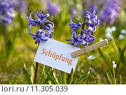 Купить «life spring living creativity development», фото № 11305039, снято 22 июля 2019 г. (c) PantherMedia / Фотобанк Лори
