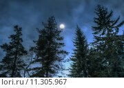 Купить «Pines at night in the woods. Moon night», фото № 11305967, снято 27 мая 2018 г. (c) PantherMedia / Фотобанк Лори