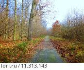 Купить «green spring grass forest meadow», фото № 11313143, снято 19 октября 2019 г. (c) PantherMedia / Фотобанк Лори