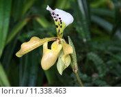 Купить «green yellow plant flower bright», фото № 11338463, снято 27 марта 2019 г. (c) PantherMedia / Фотобанк Лори
