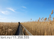 Купить «Birdwather at a footpath in the reeds at the swedish island Oland.», фото № 11358555, снято 20 июля 2019 г. (c) PantherMedia / Фотобанк Лори
