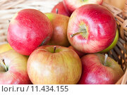 Купить «Спелые яблоки в корзинке», фото № 11434155, снято 23 августа 2015 г. (c) Екатерина Овсянникова / Фотобанк Лори