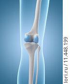 Купить «medical illustration of the knee», иллюстрация № 11448199 (c) PantherMedia / Фотобанк Лори