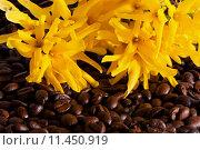 Купить «fun brown yellow joy brunette», фото № 11450919, снято 20 сентября 2018 г. (c) PantherMedia / Фотобанк Лори