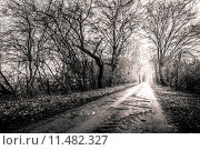 Купить «Black and white photo of a road surrounded my trees with light at the end», фото № 11482327, снято 22 мая 2019 г. (c) PantherMedia / Фотобанк Лори