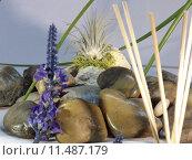 Купить «green plant flower decoration grass», фото № 11487179, снято 20 сентября 2019 г. (c) PantherMedia / Фотобанк Лори