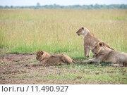 Купить «nature green animal holiday sport», фото № 11490927, снято 21 марта 2019 г. (c) PantherMedia / Фотобанк Лори