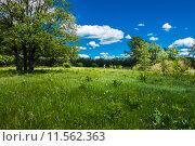 Купить «Летний пейзаж с деревьями под синим небом и облаками», фото № 11562363, снято 8 июня 2015 г. (c) Сергей Лысенко / Фотобанк Лори