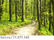 Купить «Early morning sun in the green forest», фото № 11571143, снято 19 октября 2019 г. (c) PantherMedia / Фотобанк Лори
