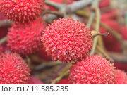 Купить «wild fruit from forest, wild lychee», фото № 11585235, снято 22 марта 2019 г. (c) PantherMedia / Фотобанк Лори