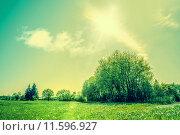 Купить «Countryside scenery with green fields and sunshine», фото № 11596927, снято 22 мая 2019 г. (c) PantherMedia / Фотобанк Лори