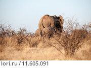 Купить «africa trunk safari elephant savannah», фото № 11605091, снято 22 августа 2018 г. (c) PantherMedia / Фотобанк Лори