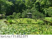 Купить «Каменный фонарь в японском стиле в Японском саду. Главный Ботанический Сад имени Н.В.Цицина в Москве», эксклюзивное фото № 11652071, снято 8 августа 2015 г. (c) lana1501 / Фотобанк Лори