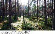 Купить «Солнечный лес», видеоролик № 11706467, снято 21 августа 2015 г. (c) Михаил Коханчиков / Фотобанк Лори