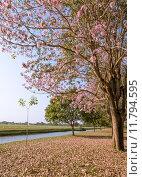Pink trumpet blossom. Стоковое фото, фотограф Boonsom Chotpaiboonpun / PantherMedia / Фотобанк Лори