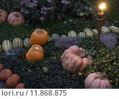 Купить «orange garden autumn fall halloween», фото № 11868875, снято 20 июня 2019 г. (c) PantherMedia / Фотобанк Лори
