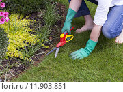 Купить «green care garden gardening lawn», фото № 11903851, снято 20 августа 2018 г. (c) PantherMedia / Фотобанк Лори