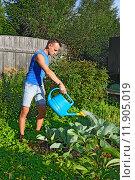 Купить «Молодой мужчина поливает из синей лейки капусту на грядке на приусадебном участке летом», фото № 11905019, снято 5 августа 2015 г. (c) Максим Мицун / Фотобанк Лори