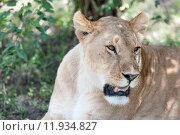 Купить «nature green animal holiday sport», фото № 11934827, снято 21 марта 2019 г. (c) PantherMedia / Фотобанк Лори