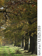Купить «tree trees avenue calibrate alleeb», фото № 12025559, снято 25 марта 2019 г. (c) PantherMedia / Фотобанк Лори