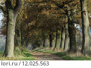 Купить «tree trees avenue calibrate alleeb», фото № 12025563, снято 15 июля 2020 г. (c) PantherMedia / Фотобанк Лори