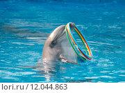 Купить «Дельфин держит кольца. Дельфинарий», фото № 12044863, снято 20 января 2018 г. (c) Михаил Егоров / Фотобанк Лори
