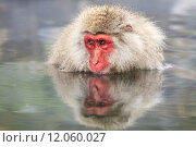 monkey is relaxation. Стоковое фото, фотограф Nicholas Han / PantherMedia / Фотобанк Лори