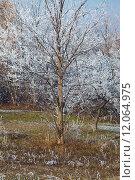 Купить «Winter tree», фото № 12064975, снято 17 июня 2019 г. (c) PantherMedia / Фотобанк Лори