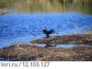 Купить «water sea ocean bird rest», фото № 12103127, снято 25 марта 2019 г. (c) PantherMedia / Фотобанк Лори