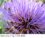 Купить «garden blossom purple bloom violet», фото № 12119443, снято 25 марта 2019 г. (c) PantherMedia / Фотобанк Лори