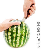 Купить «Incision Of Watermelon With A Knife», фото № 12160843, снято 23 марта 2019 г. (c) PantherMedia / Фотобанк Лори