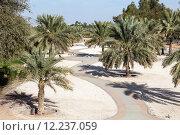 Купить «Palm Trees in a city park of Al Ain. Emirate of Abu Dhabi, UAE», фото № 12237059, снято 18 ноября 2018 г. (c) PantherMedia / Фотобанк Лори