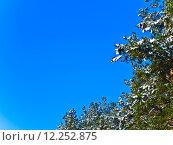 Купить «branches and blue sky», фото № 12252875, снято 17 июня 2019 г. (c) PantherMedia / Фотобанк Лори