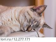 Купить «A nice cat», фото № 12277171, снято 17 июня 2019 г. (c) PantherMedia / Фотобанк Лори