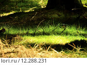 Купить «nature green summer grass forest», фото № 12288231, снято 26 июня 2019 г. (c) PantherMedia / Фотобанк Лори