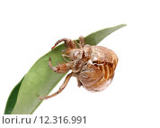 Купить «nature animal wild dry insect», фото № 12316991, снято 15 октября 2019 г. (c) PantherMedia / Фотобанк Лори